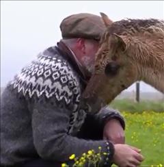 FEI TV - Icelandic Horses part 2